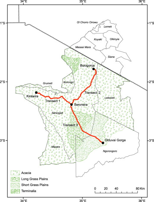 Long-term surveys of age structure in 13 ungulate and one ostrich species in the Serengeti, 1926–2018