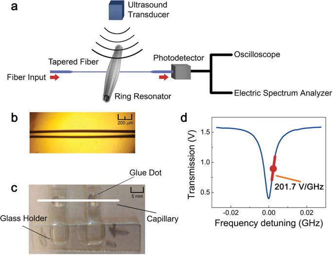 air coupled ultrasound detection  capillary based optical ring resonators scientific reports
