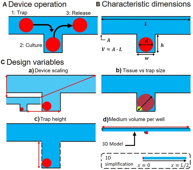 Force Vs Mass Flow Rate: Simulation-assisted Design Of Microfluidic Sample Traps