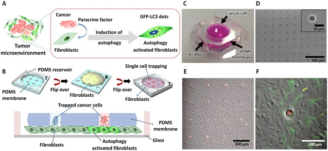 A Microfluidic Chip For Screening Individual Cancer Cells