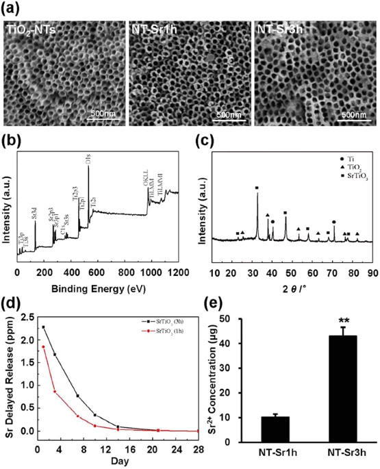 Strontium loaded titania nanotube arrays repress osteoclast microstructure and surface chemistry characterisation of the samples a fe sem images of tio2 nt nt sr1h and nt sr3h the scale bar represents 500 nm malvernweather Gallery