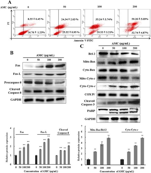 athyrium multidentatum (doll.) ching extract induce apoptosis via