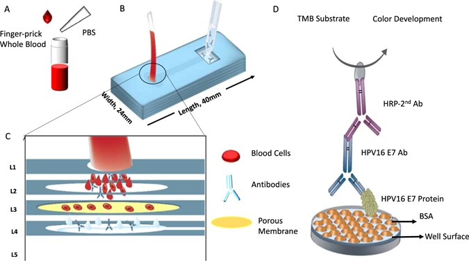 isolation detection and quantification of cancer