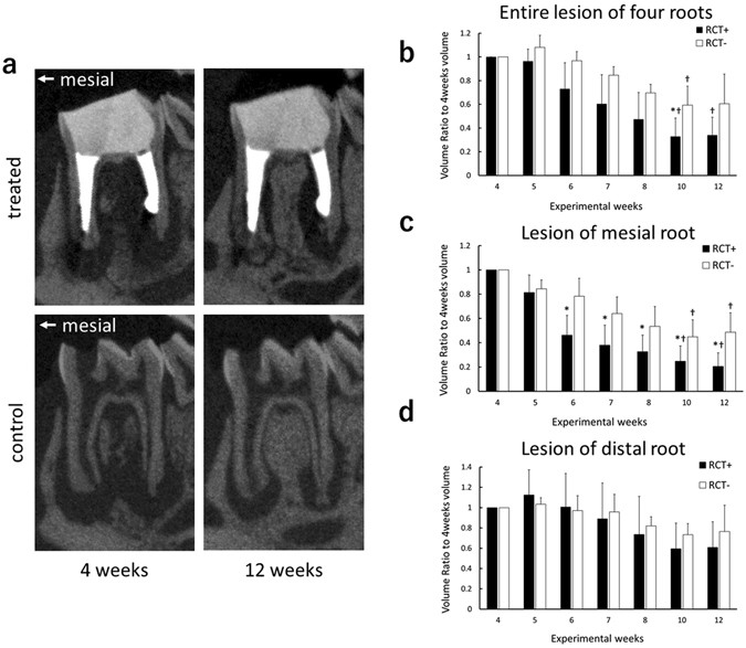 Development Of A Root Canal Treatment Model In The Rat Scientific