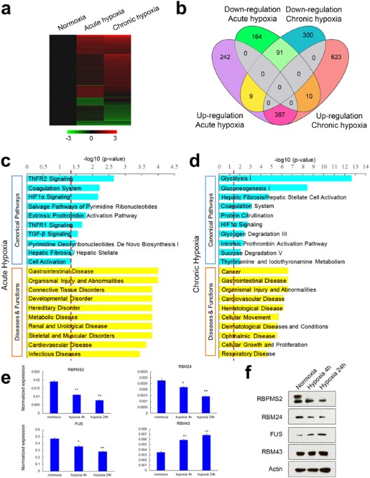hypoxia is a key driver of alternative splicing in human