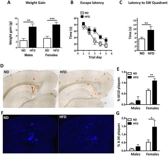 high fat diet give mice tau