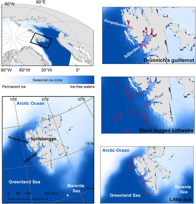 Arctic Ocean Food Web: Sea Ice Phenology And Primary Productivity Pulses Shape