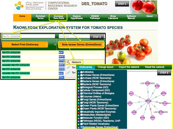 DES-TOMATO  A Knowledge Exploration System Focused On Tomato Species ... 93f98470bf
