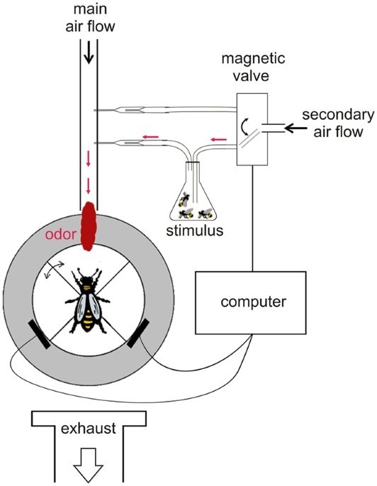 virgin queen attraction toward males in honey bees scientific reportsProcess Diagram Likewise Water Mill Diagram Moreover Diagram Of A Wind #1