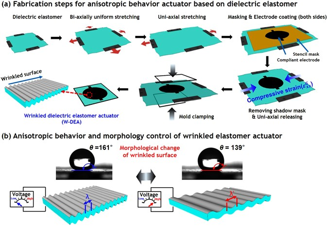 Surface Modification Of Anisotropic Dielectric Elastomer