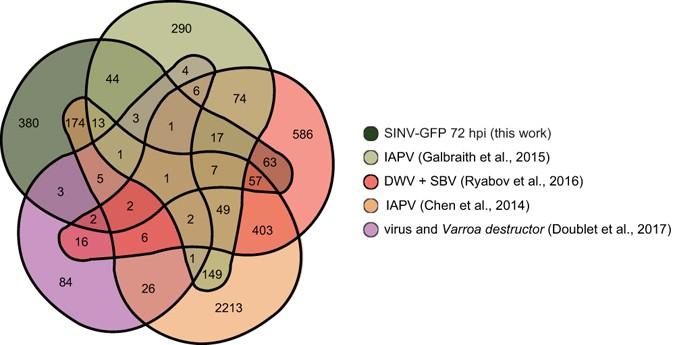 Virus And Dsrna Triggered Transcriptional Responses Reveal Key