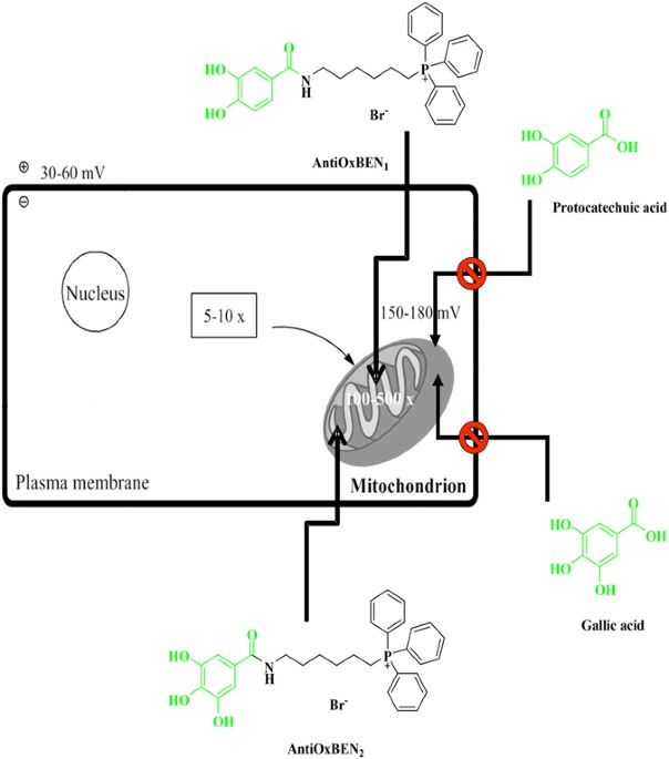 Development of hydroxybenzoic-based platforms as a solution to