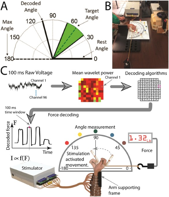 Neuroprosthetic Enabled Control Of Graded Arm Muscle Contraction In