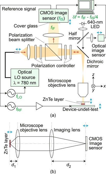 Microscopic live electrooptic imaging scientific reports a schematic of the setup for microscopic live electrooptic imaging is shown in a together with a conceptual drawing of its imaging optics for microscopy ccuart Images