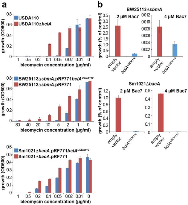 Integrated roles of bcla and dd carboxypeptidase 1 in bradyrhizobium figure 1 fandeluxe Gallery