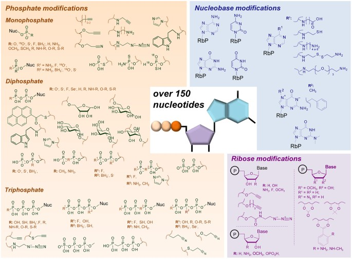 Analysis of mononucleotides by tandem mass spectrometry