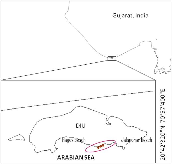 Intertidal marine sediment harbours Actinobacteria with