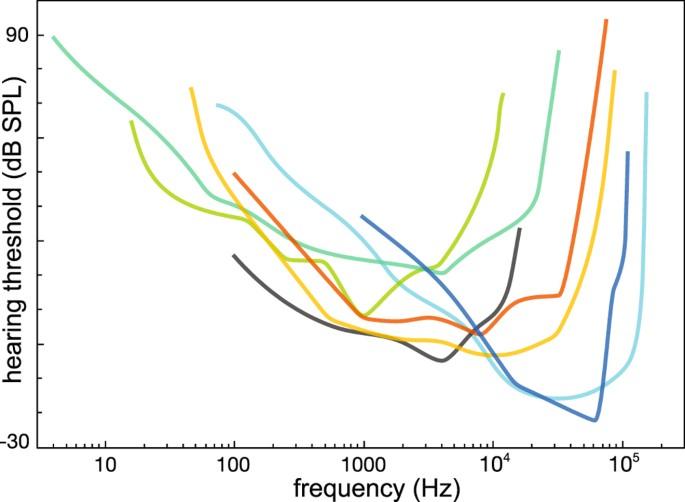 Frequency Sensitivity In Mammalian Hearing From A Fundamental