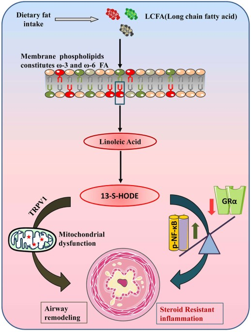 Dietary Lipids Absorbed Through Intestine Are Converted To Long Chain Fatty Acids Which Serve As A Precursor For The Formation Of Phospholipids