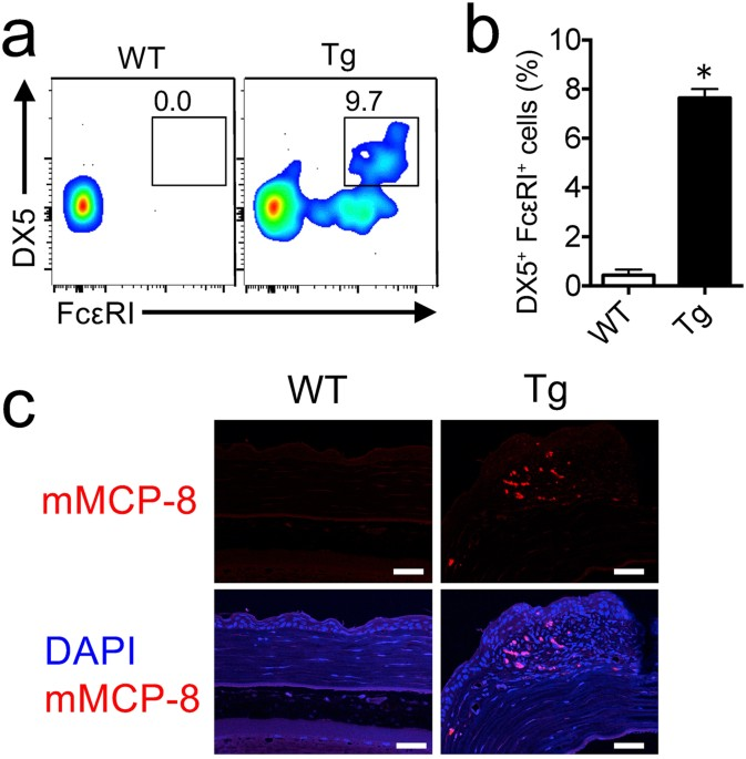 expression of il 33 in ocular surface epithelium induces atopic