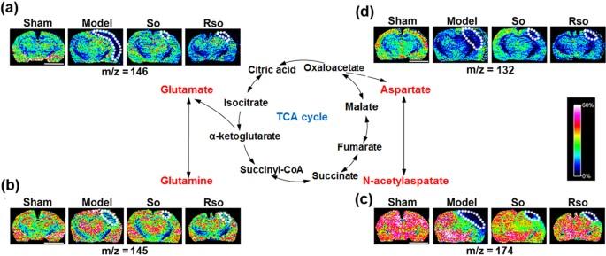 S Oxiracetam Is The Active Ingredient In Oxiracetam That