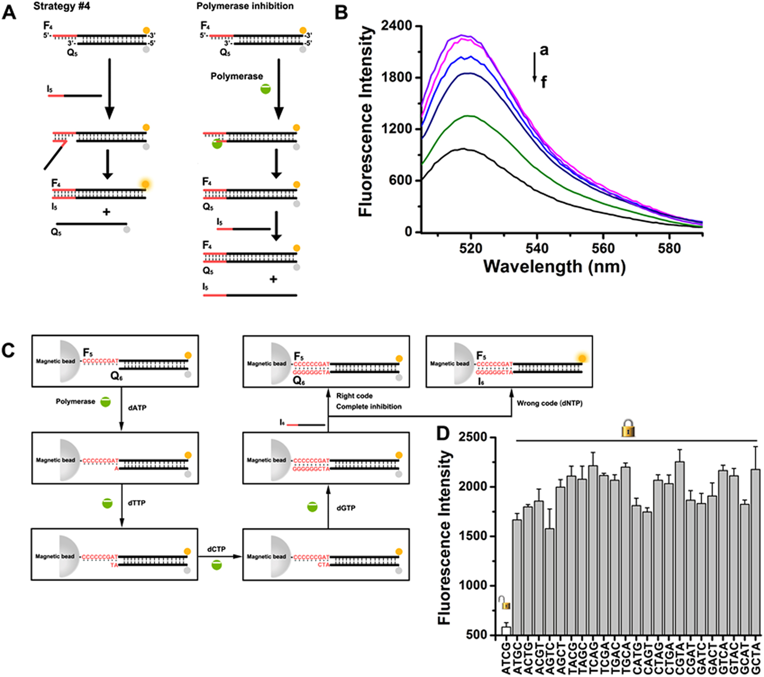 Flexible Regulation Of Dna Displacement Reaction Through Nucleic Logic Gates And Cascaded Circuits Dynamic Nanotechnology Using B Fluorescence Spectra Changes Observed Upon Treatment The Sensing Module With Variable Concentrations Polymerase A 0