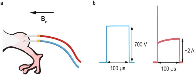Predicting Irreversible Electroporation Induced Tissue Damage By