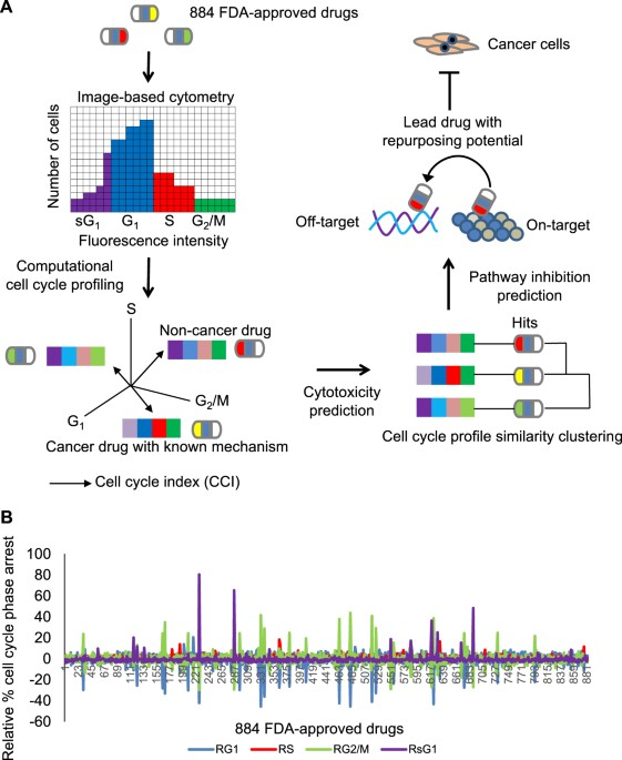 Computational Cell Cycle Profiling of Cancer Cells for