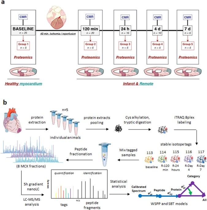 Proteomic Footprint Of Myocardial Ischemiareperfusion Injury