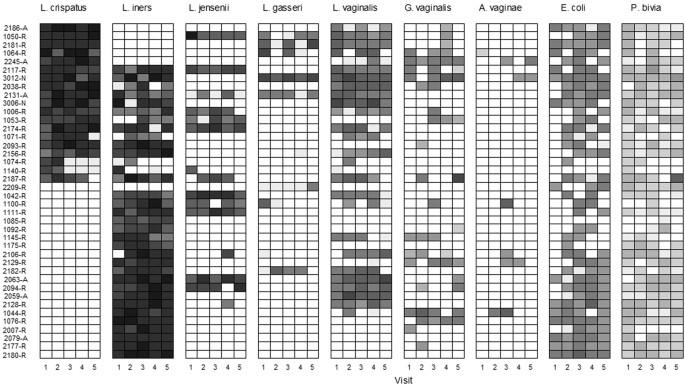 A longitudinal analysis of the vaginal microbiota and