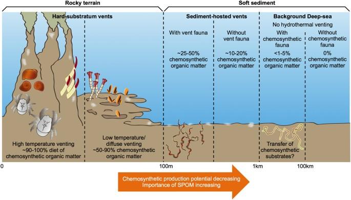 Hydrothermal Vents Food Web Labeled Diagrams Car Wiring Diagrams