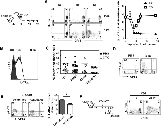 Adjuvant IL-7 potentiates adoptive T cell therapy by amplifying and