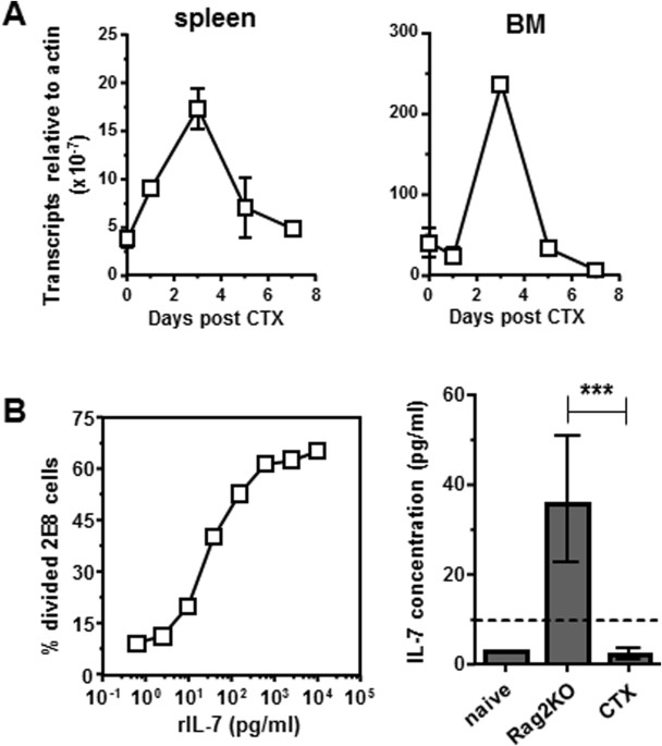 Adjuvant IL-7 potentiates adoptive T cell therapy by amplifying and ...