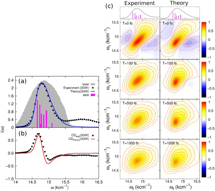Primary Charge Separation in the Photosystem II Reaction
