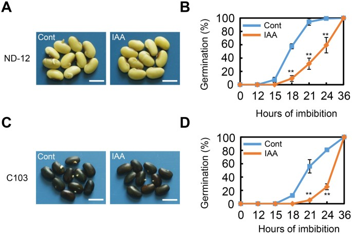Exogenous auxin represses soybean seed germination through