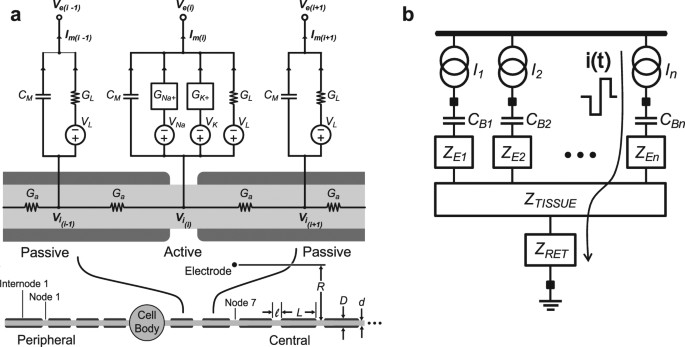 energy efficient waveform for electrical stimulation of the cochlear rh nature com