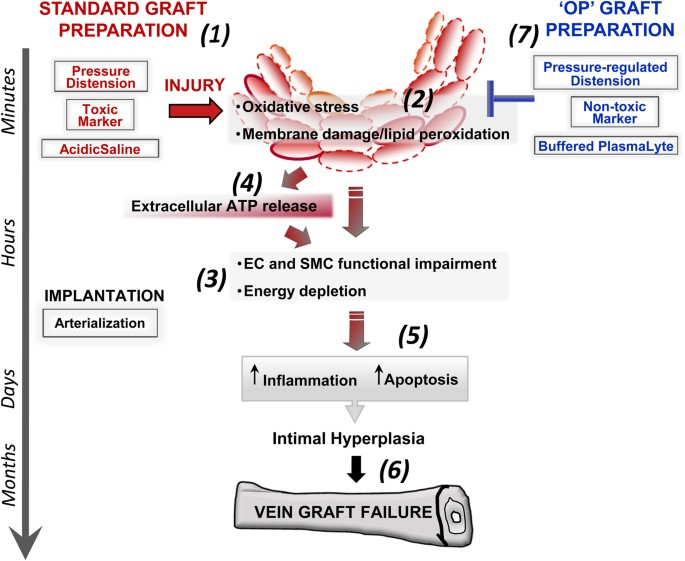 Limiting Injury During Saphenous Vein Graft Preparation For Coronary