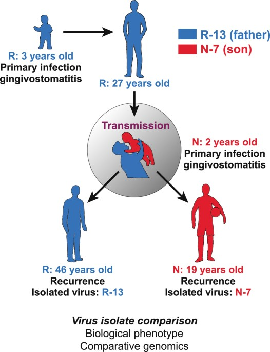 Mode of transmission of viral diseases-8871