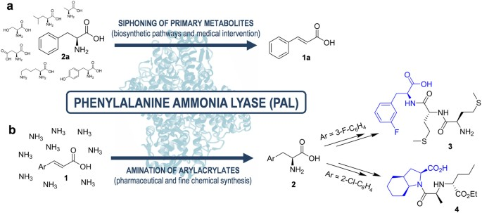Zymophore identification enables the discovery of novel phenylalanine ammonia lyase enzymes