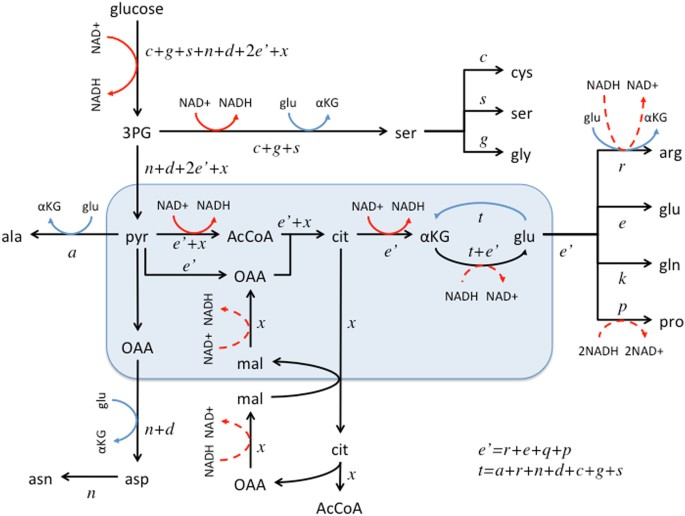 Limits Of Aerobic Metabolism In Cancer Cells Scientific Reports