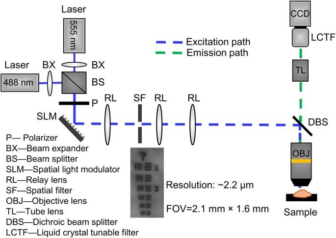 Near Simultaneous Intravital Microscopy Of Glucose Uptake