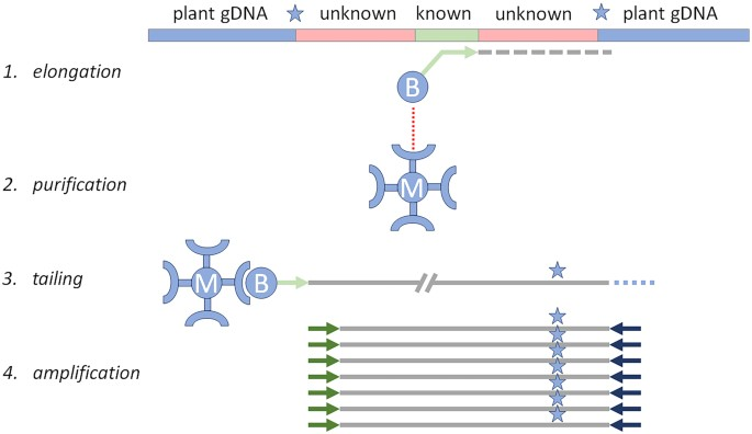 Alf A Strategy For Identification Of Unauthorized Gmos In Complex
