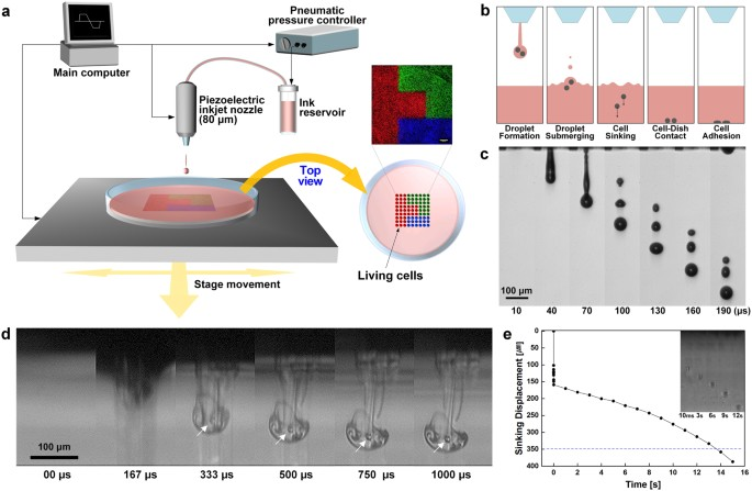Freeform Micropatterning Of Living Cells Into Cell Culture