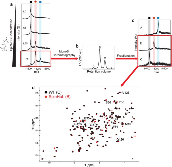 Application Of Lysine Specific Labeling To Detect Transient