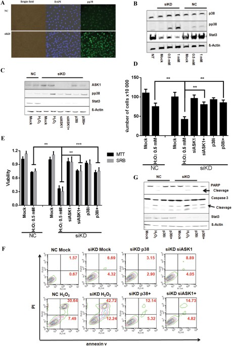 Essential Role Of Mitochondrial Stat3 In P38 Mapk Mediated