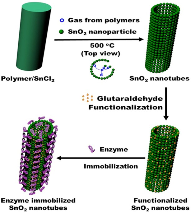 sno 2 hollow nanotubes: a novel and efficient support matrix for enzyme  immobilization | scientific reports