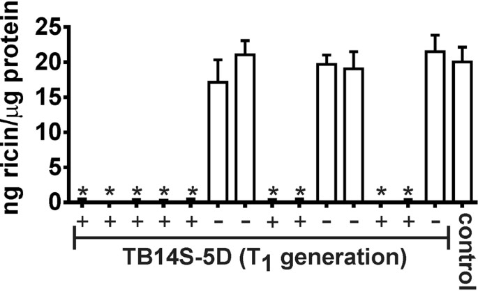 Bio Detoxification Of Ricin In Castor Bean Ricinus Communis L