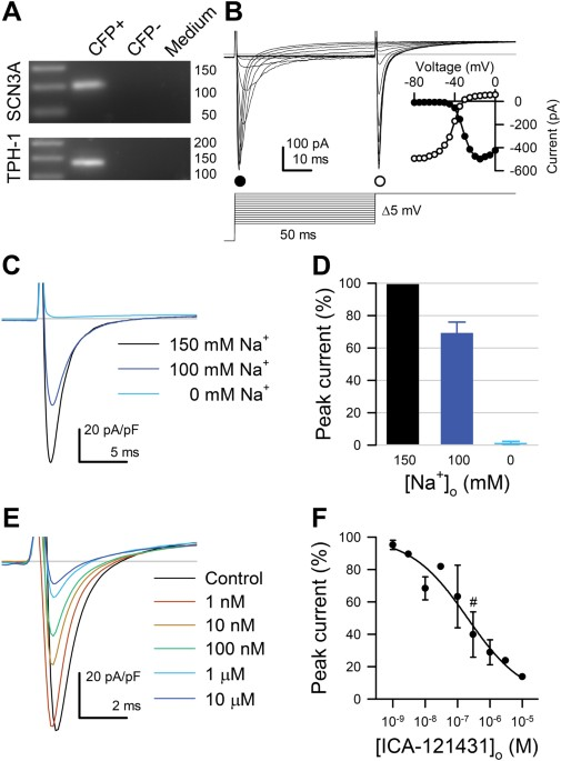 Sodium Channel Na V 13 Is Important For Enterochromaffin Cell