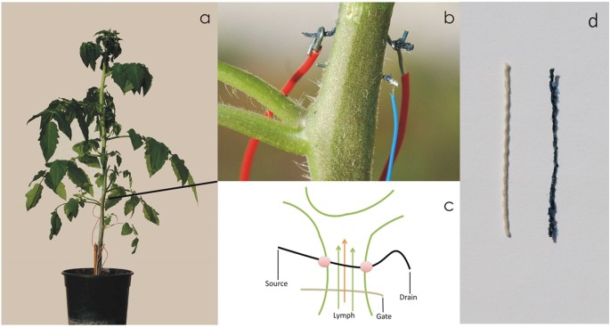 Risultati immagini per biosensor plant