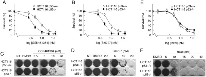 the responses of cancer cells to plk1 inhibitors reveal a novel protective role for p53 in